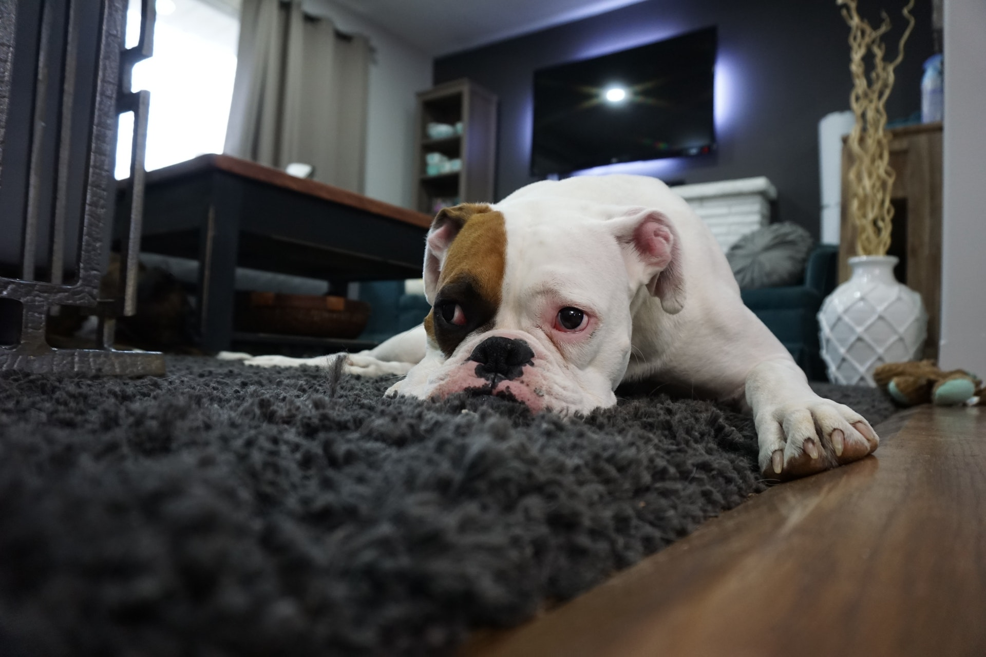 How to Repair Furniture Damaged by Pets
