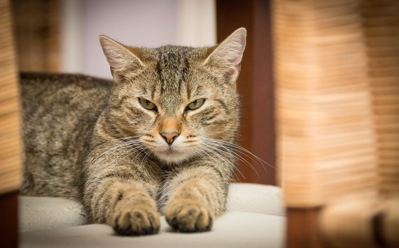 Pets and Leather Furniture: How to Keep Your Leather Furniture Safe from Damage